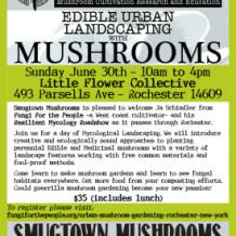 Sunday Mushroom Workshop!